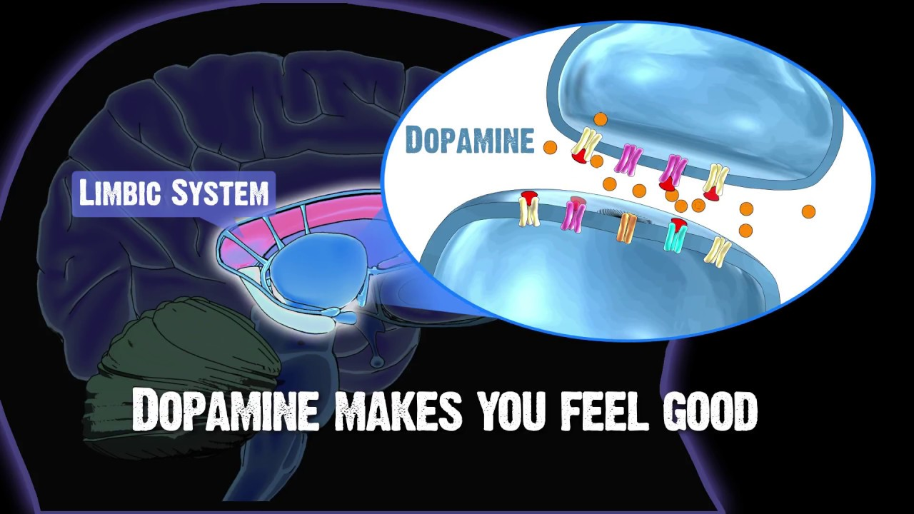 Drug and Alcohol Abuse and The Brain: Limbic System - YouTube