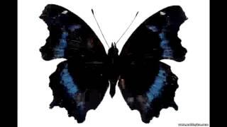 Что такое эффект бабочки?
