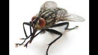 Как сделать ловушку для мух -  простая мухоловка
