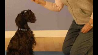 Dog Training Jacksonville Fl | 904-249-3090