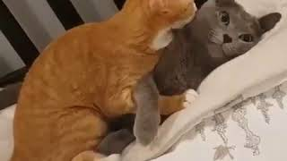 Приколы про кошек 2019. Приколы с котами и кошками. Приколы про кошек бесплатно