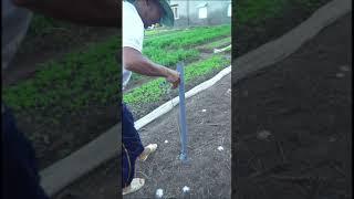 Công cụ bỏ phân cây trồng không tồn sức #Shorts plant seeds