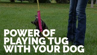 The Power Of Playing Tug With Your Dog