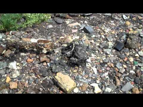 Trek and Run; Queenborough to Burntwick Island