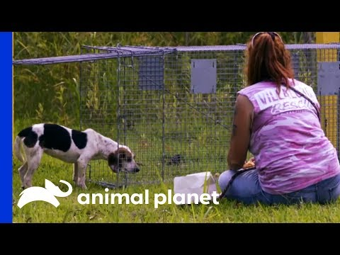 Tia's Leg Injury Makes This Rescue Very Difficult | Pit Bulls & Parolees
