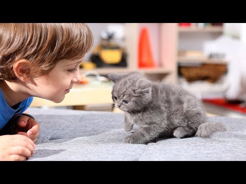 Kittens and Babies Playing Together Compilation (2017)