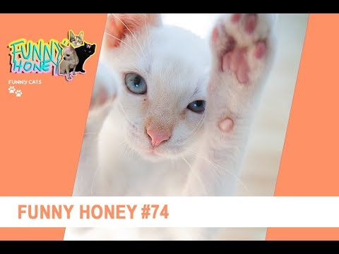 Funny horney — photo 12