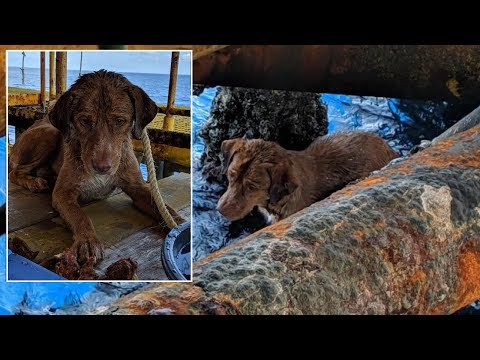 Madison - Doing Good:  Oil Rig workers rescue dog in the middle of the ocean