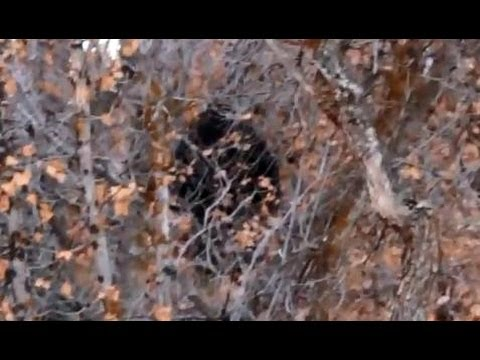 Provo Canyon Bigfoot Encounter? - YouTube