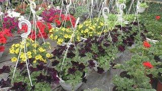 Таким цветам позавидуют и голландцы!)))