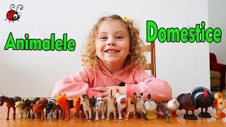 Ce este sub Pahar? Cautam si Invatam  Animalutele Domestice   Video Educativ pentru Copii