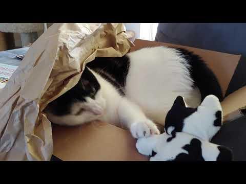 Audrey Enjoying Her Jackson Galaxy Order Packaging