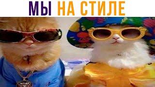 Коты на стиле Приколы с котами Мемозг 657