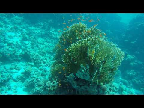 Diving in Red Sea, Sharm El Sheikh,  Egypt, 2016