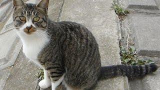 野良猫に猫の喧嘩の声を聞かせたら予想以上に慌ててしまいましたwww.