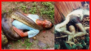 Animals Attacks 😱 Giant Anaconda,Shark Attacks live