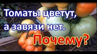 Почему томаты цветут, а завязи нет? Выращивание томатов. Когда подкармливать томаты.