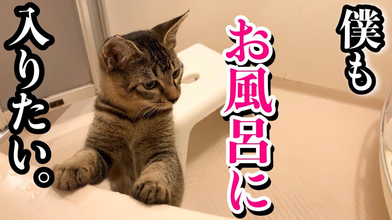 子猫 ちょっと エッチ な