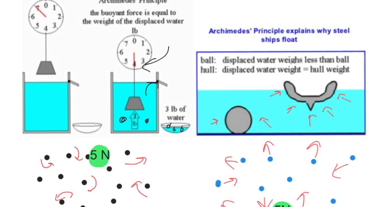 The Buoyant Force and Archimedes Principle - YouTube