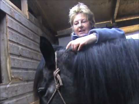 How To Trim A Bridlepath On Your Horse's Mane (Jacqui Wild)