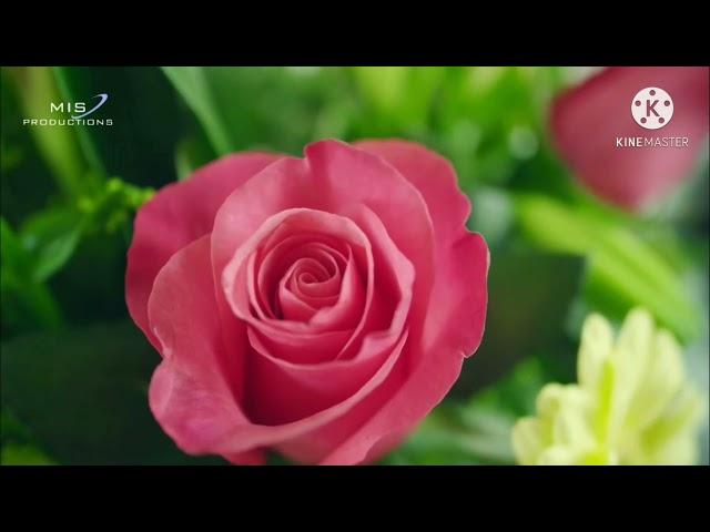Eik Mein Hi Nahi Un par Qurban Zamana hai - Translation