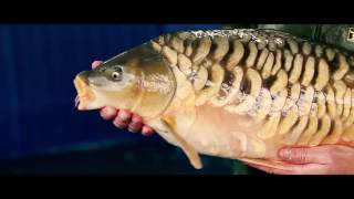 The Life of a Fish Farmer - Team Korda