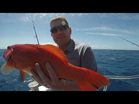 Great Barrier Reef Fishing Charter With Cairns Reef Fishing