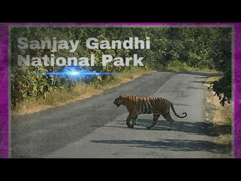 Sanjay Gandhi National Park (SGNP) Mumbai