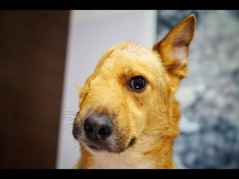 BEST DOG RESCUE VIDEO YOU WILL SEE TODAY!