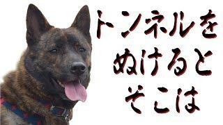 甲斐犬ハルヱと柴犬エミーを連れ家族で宮ヶ瀬湖へ安・近・短ドライブ。...