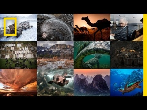 A Year of Images in 30 Seconds: Photo of the Day | National Geographic