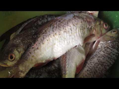 Самая полезная рыба -