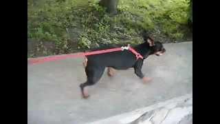 Śladami psa odcinek 8 spacer z psem