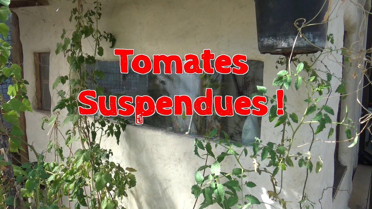 Planter Des Tomates En Pot tomates suspendues