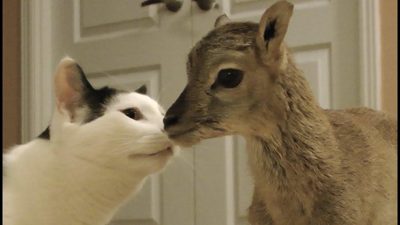 Newborn Lamb meets Pancake and Sugar Tree the Doberman - YouTube