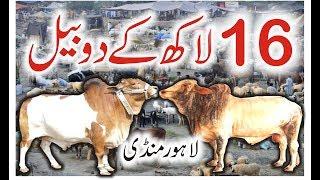 Cow Mandi Lahore 2017 | Vip Tents | Episode 3 | New Video Urdu/Hindi