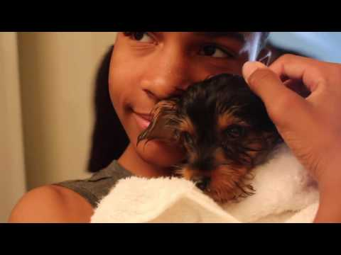 Your Best Friend Tj and ChancetheYorkie