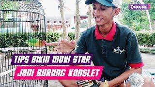 Tips Bikin Lovebird Movi Star Jadi Burung Konslet