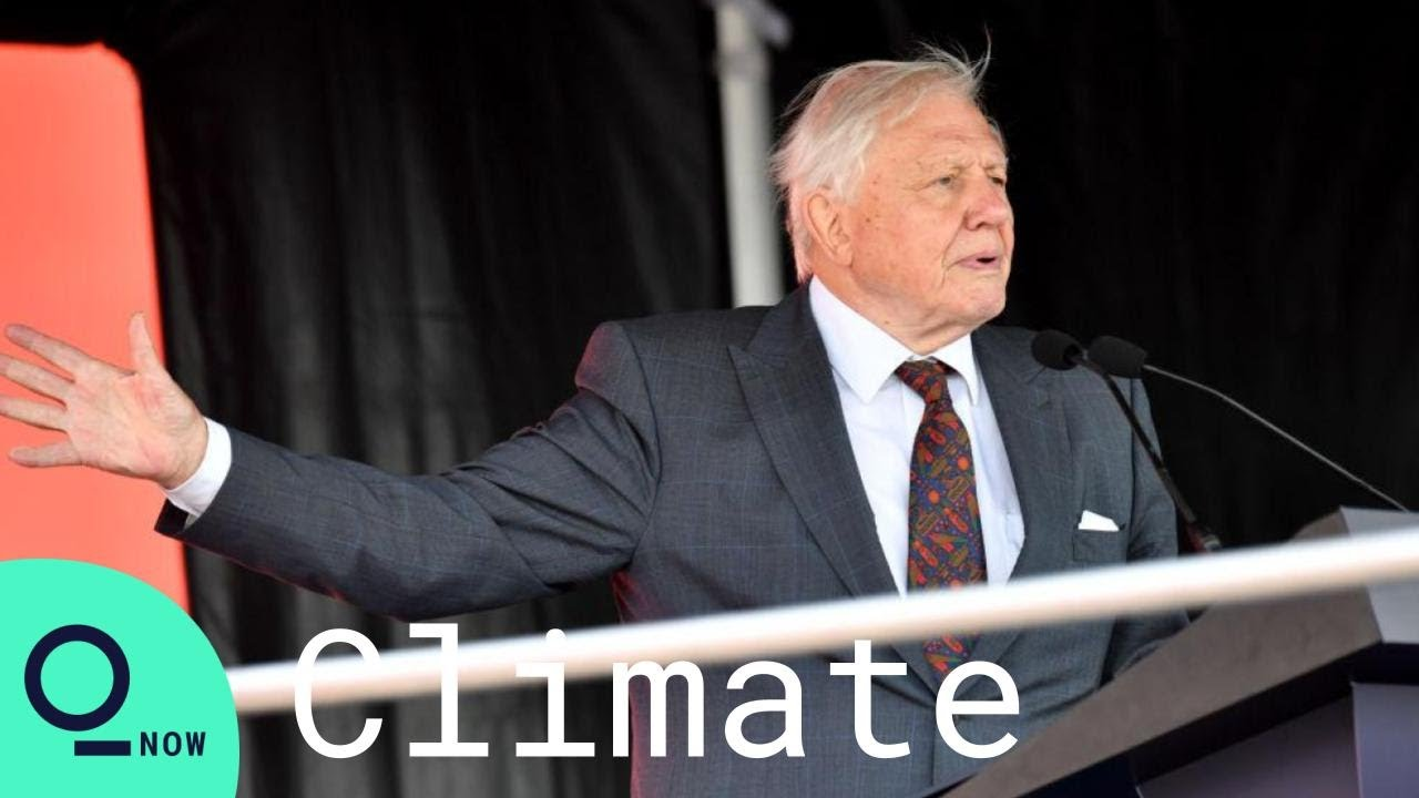 Sir David Attenborough UN Speech: 'It's Too Late to Avoid Climate Change'