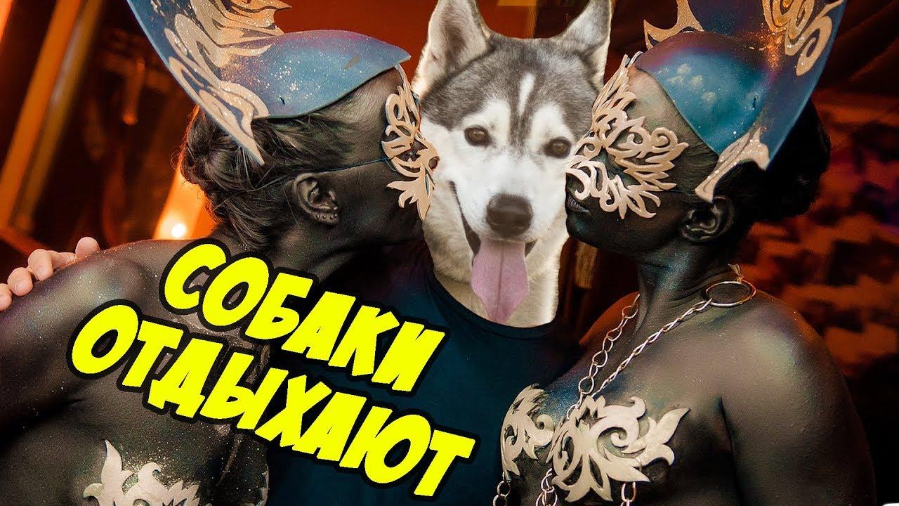 Купить собаку или щенка в зоомагазине изюма: большой выбор пород собак и щенков в изюме продажа собак (щенков) от. Хаски (4) · цвергшнауцер (1 ) · чау-чау (2) · чихуахуа (30) · шар-пей (5). Доставка в изюм из харькова.