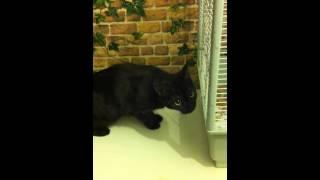 Кошка против попугаев начало .