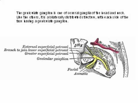 The Geniculate Ganglion.flv