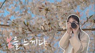 캐논에 봄을 담다 | 벚꽃 브이로그 | 봄봄봄 | 짱아…