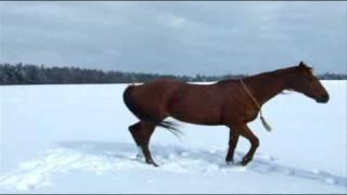 A winter romance & bridleless horsemanship practising