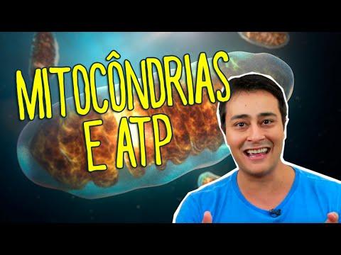 MITOCÔNDRIAS E ATP - Prof. Paulo Jubilut