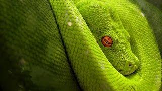Aprende DJango de Python desde cero(Quieres aprender cómo crear un CMS con Node.js? https://www.youtube.com/watch?v=gRgD7nCDNV8 Aprende más en http://www.codejobs.biz ..., 2012-11-24T19:18:08.000Z)