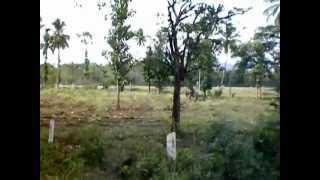 Nilgiri Mountain Railway- Rolling through the Betel Nut Forest