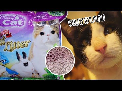 ทาสแมว EP.1 เจอแล้ว!! ทรายแมวที่เก็บกลิ่นดีที่สุดเท่าที่เคยใช้มา ทรายแมวเต้าหู้ | Cozy T