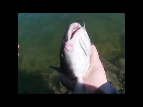 Catfishing In Cold Water