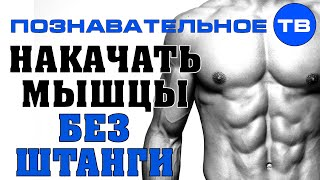 Накачать мышцы без штанги (Познавательное ТВ, Герман Тюхтин)(Герман Тюхтин: Накачать мышцы без штанги. Комплекс простых упражнений для накачивания мышц, не требующий..., 2014-08-17T04:39:33.000Z)